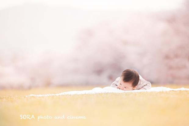 太宰府 桜