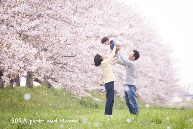 桜_家族写真